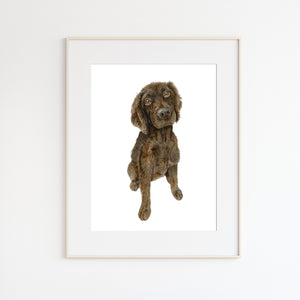 Boykin Spaniel Pet Portrait