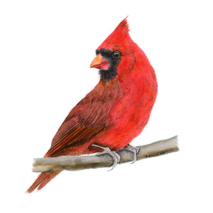 Red Cardinal Portrait