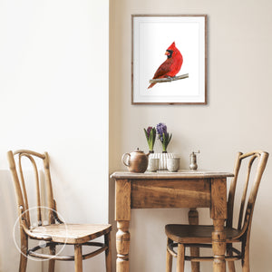 Red Cardinal Watercolor Print