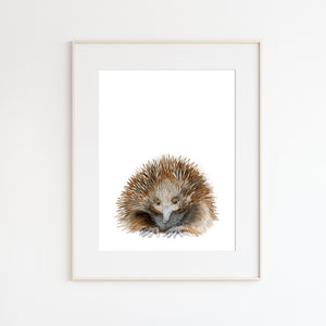 Echidna Watercolor Painting