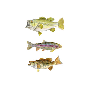Fly Fishing Lake Fish Wall Art