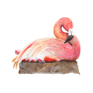 Sleeping Baby Flamingo Print