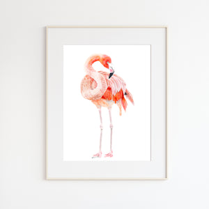 Flamingo Watercolor Illustration