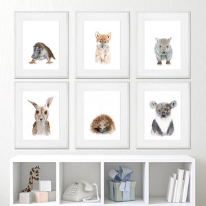 Set of 6 Framed Australian Animal Print Set