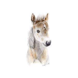 Foal Nursery Decor