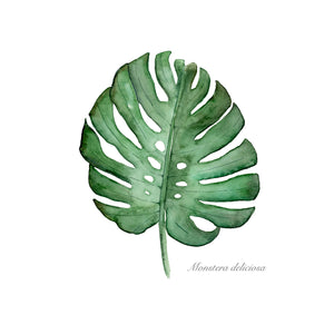 Monstera Palm Leaf Print