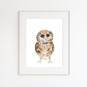 Baby Owl Illustration