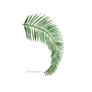 Palm Frond Watercolor