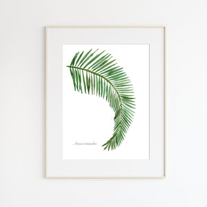 Palm Leaf Botanical Print
