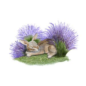 Sleeping Nut Brown Hare Portrait