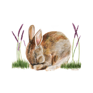 Sleeping Baby Rabbit Print
