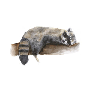 Baby Sleeping Raccoon Watercolor Art