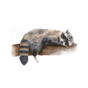 Sleeping Baby Raccoon Print