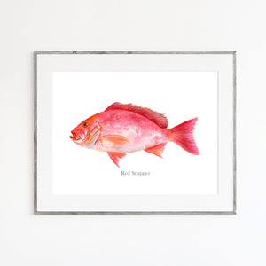 Red Snapper Watercolor Print