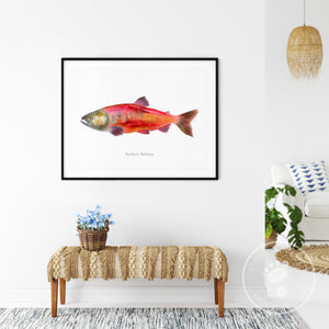 Sockeye Salmon Watercolor Print