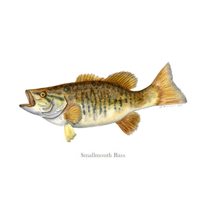 Smallmouth Bass Watercolor Art