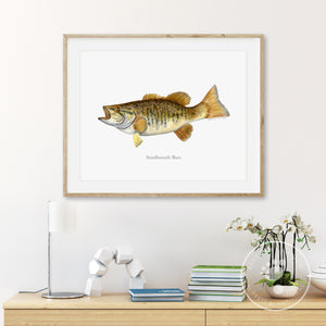 Smallmouth Bass Watercolor Print