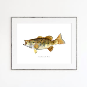 Smallmouth Bass Watercolor Mount