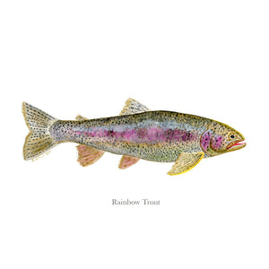 Rainbow Trout Portrait with text