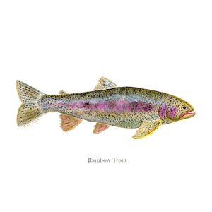 Rainbow Trout Watercolor Art