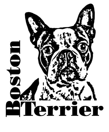 Boston Terrier Autoaufkleber #3