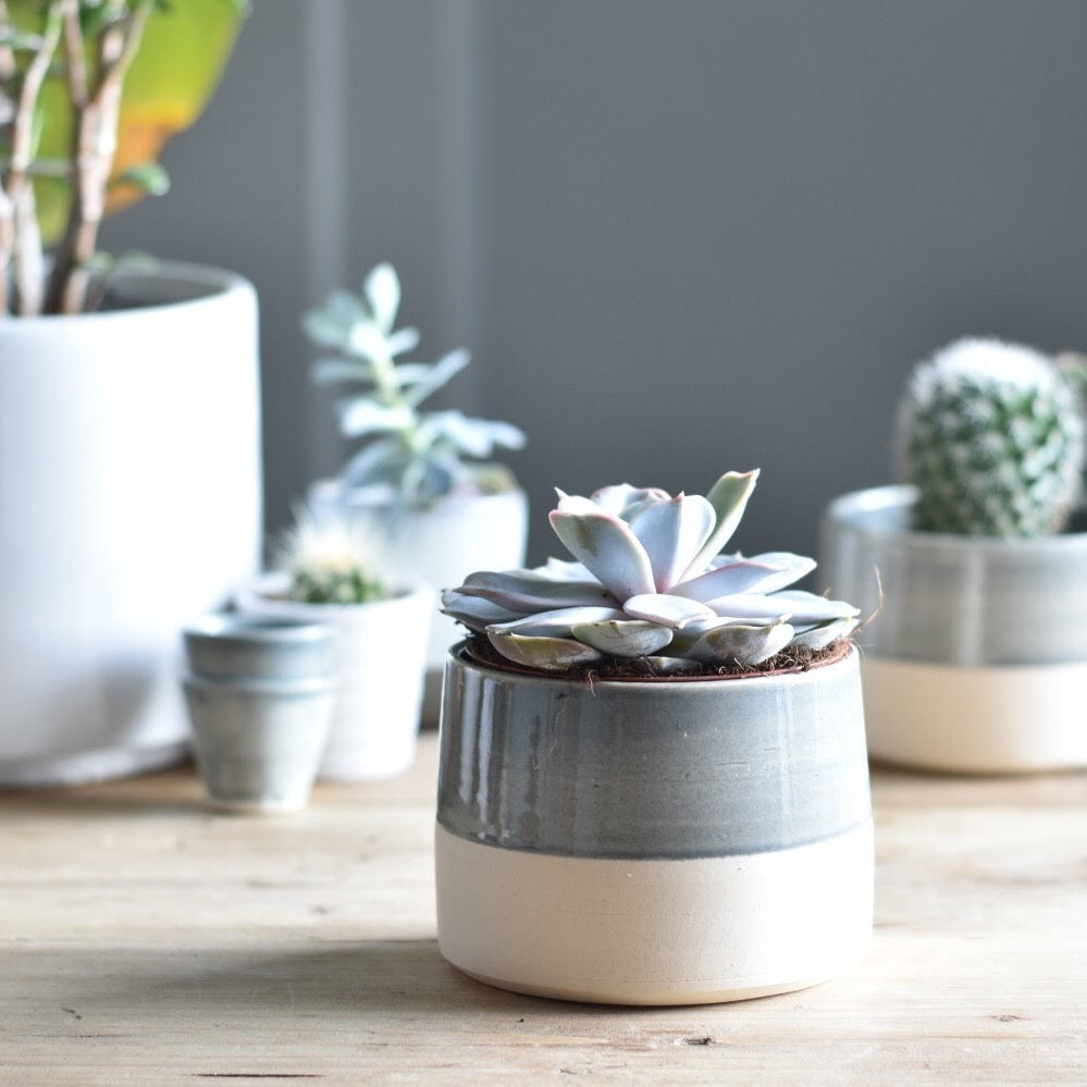 Small Ceramic Plant Pot - Grey