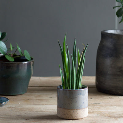 Small Plant Pot - Grey