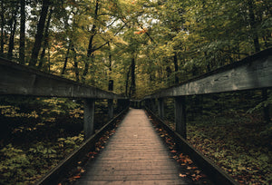 Photo of a wooden bridge in a forest with the word natural across the photo
