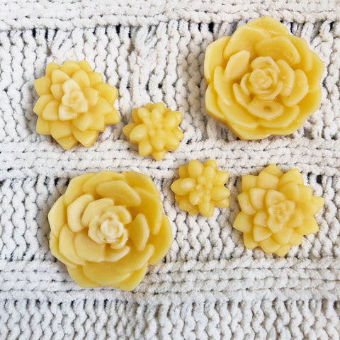 Vanilla Orange Creamsicle Beeswax Wax Melts - Succulents