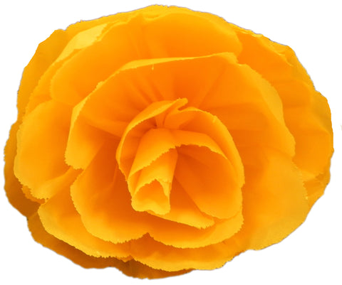 "Free shipping X Large Mexican Paper Flower Orange Rose 13"" Diameter"