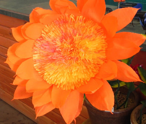 X Large Mexican Paper Flower Orange Daisy 13""