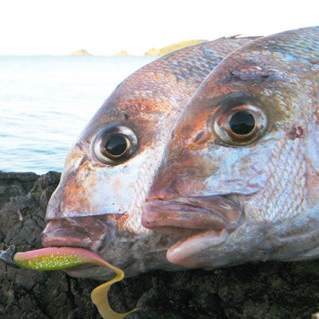 How to Catch Snapper from Shore