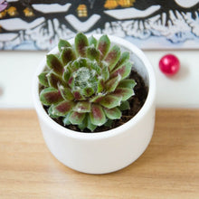 Load image into Gallery viewer, Round Succulent Plant Pot