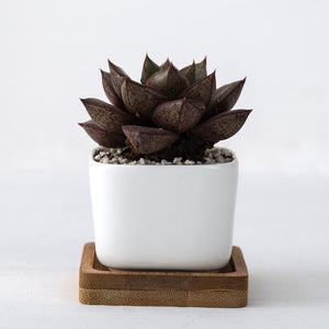 2 Piece Geometric Ceramic Pot
