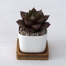 Load image into Gallery viewer, 2 Piece Geometric Ceramic Pot
