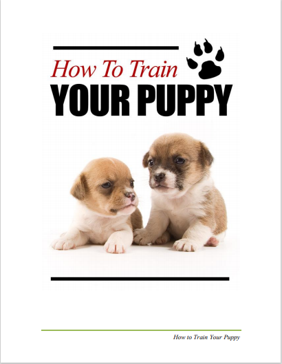 How To Train Your Puppy - Abound Pet Supplies