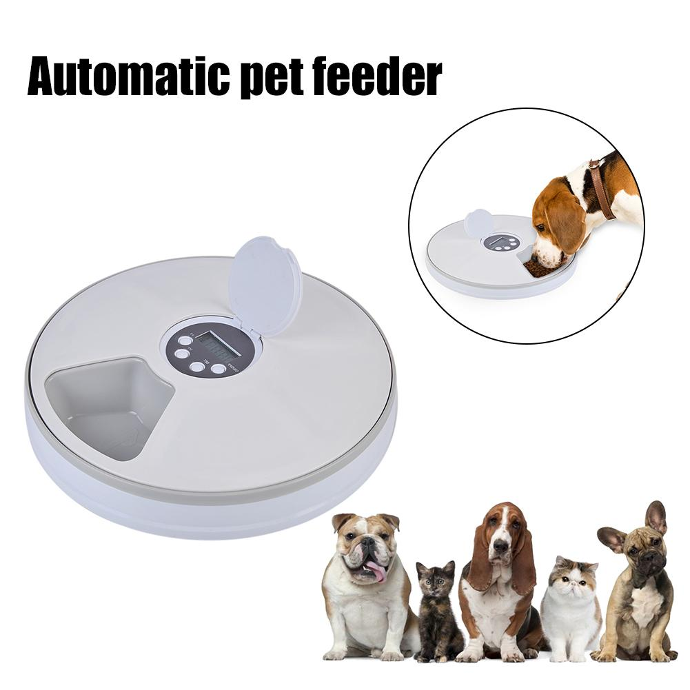 Automatic Pet Feeder with Digital Timer for Cats & Small Dogs - Abound Pet Supplies