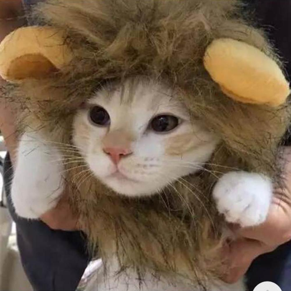 Lion Mane Wig for Cats - Abound Pet Supplies