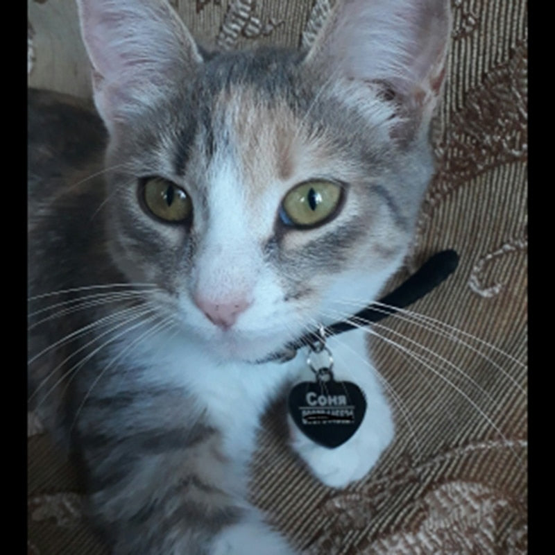 PAWFECT Cat/Dog ID Tags - Abound Pet Supplies
