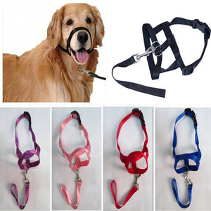 Dog Training Halter Collar - Abound Pet Supplies