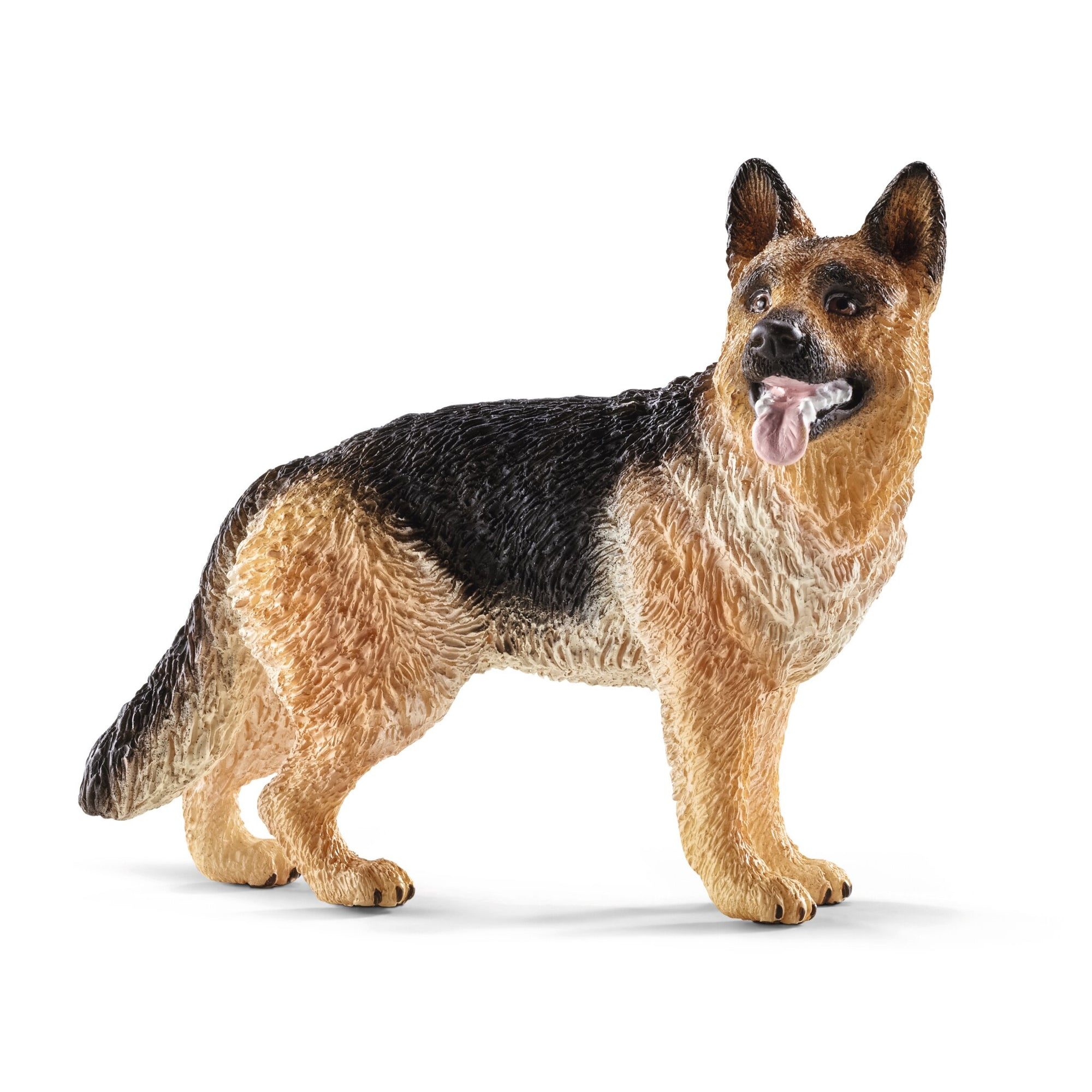 Sc16831 German Shepherd