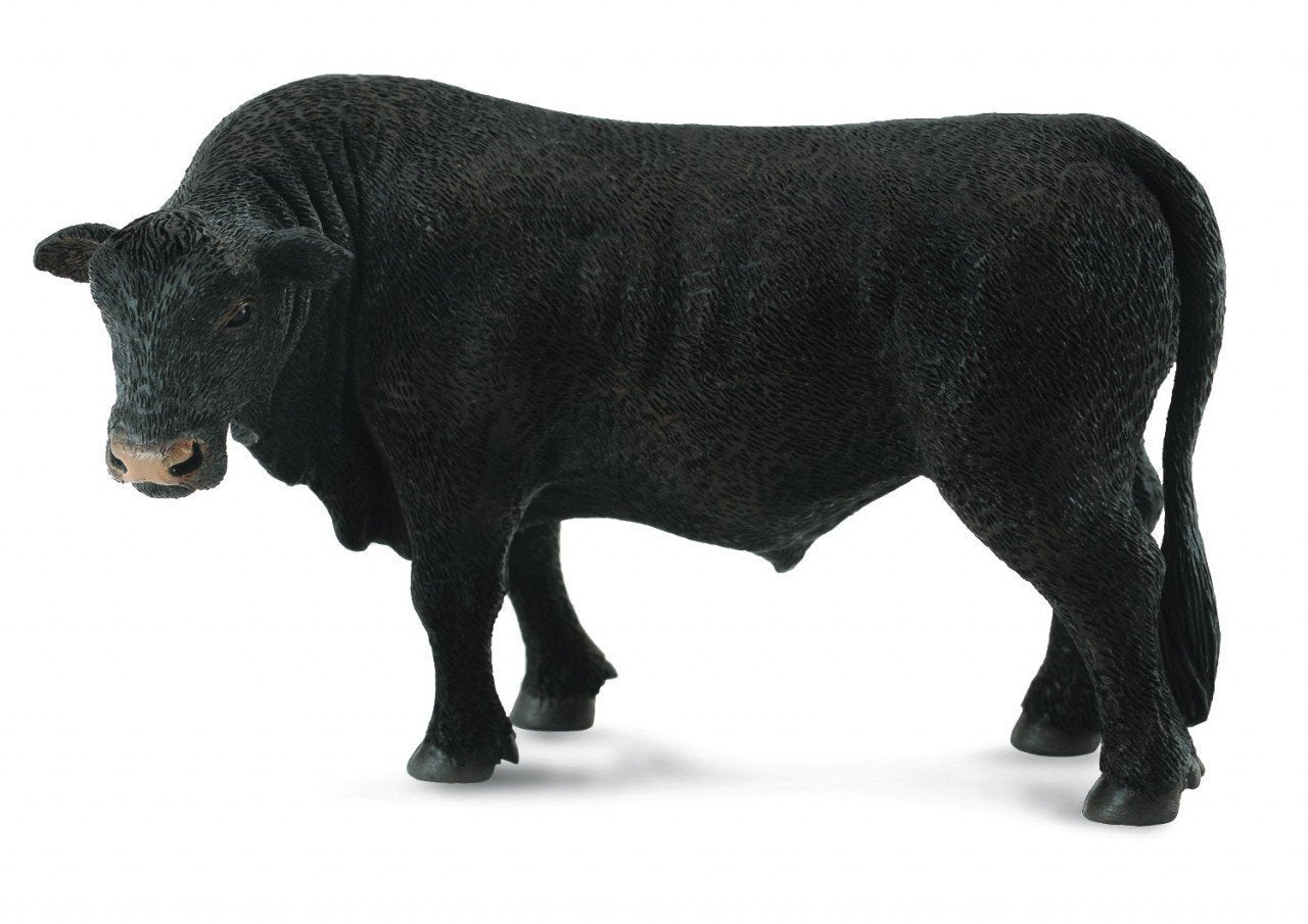 Co88507 Black Angus Bull