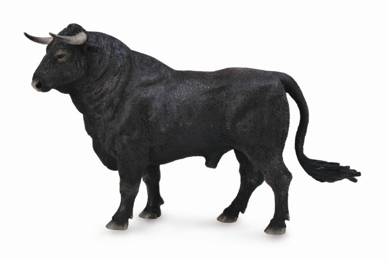 Co88803 Spanish Fighting Bull Standing