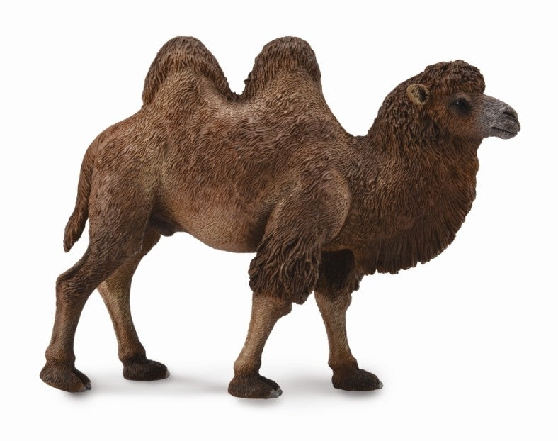 Co88807 Bactrian Camel