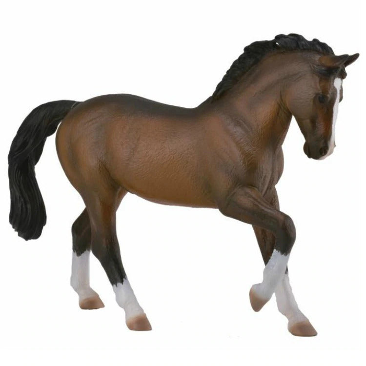 Co88827 Warmblood Stallion Bay