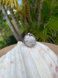 Cone Shell Top Rings (Made to Order)