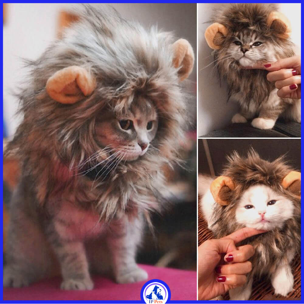 Funny cute cat costume lion mane wig