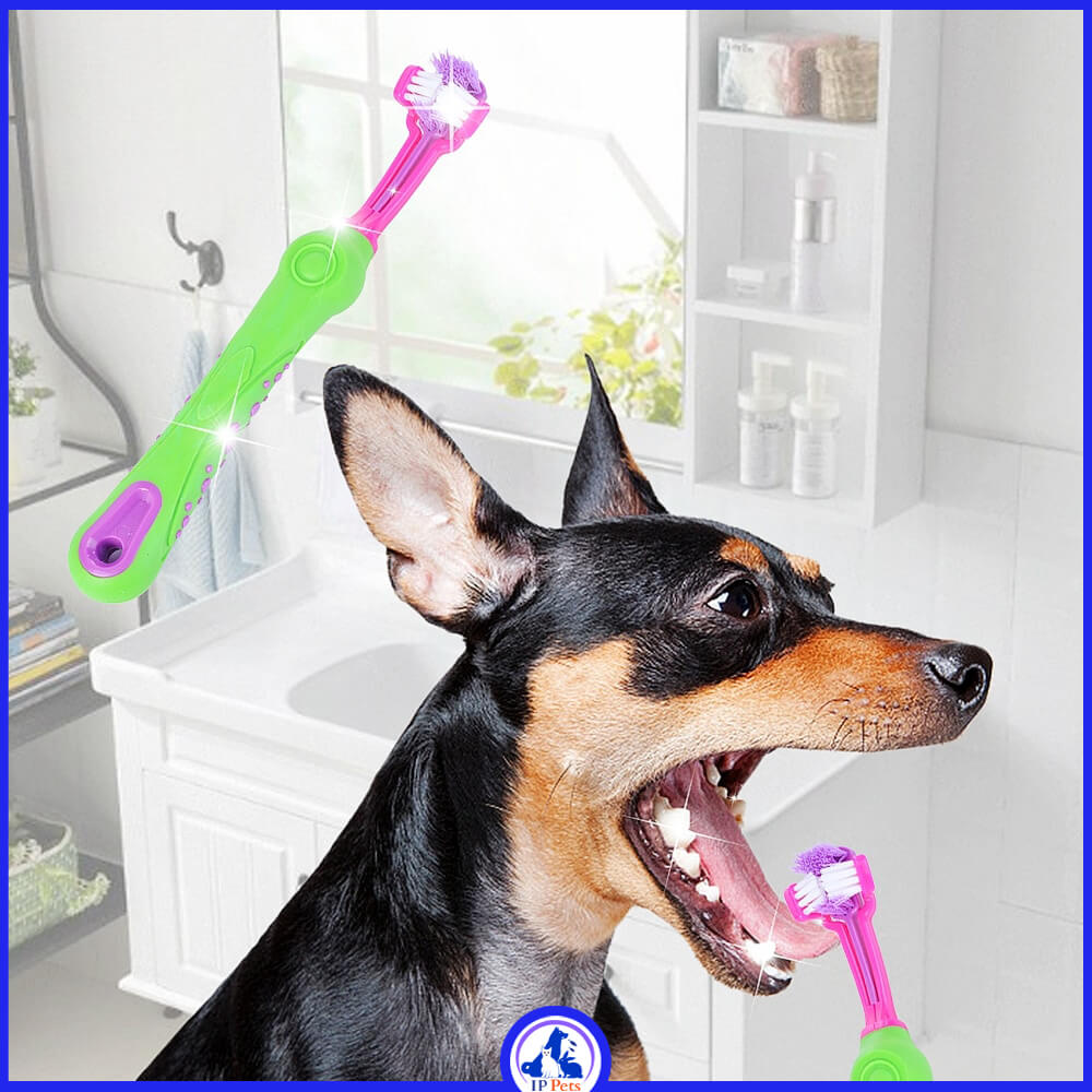 Toothbrush with gum massager pet