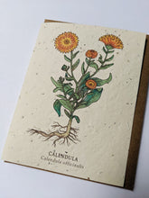 "Load image into Gallery viewer, a plantable seed card - the card has a textured look from the seeds imbedded in the paper. There is a orange floral drawing on this one that says ""Calendula - Calendula Officinalis"""