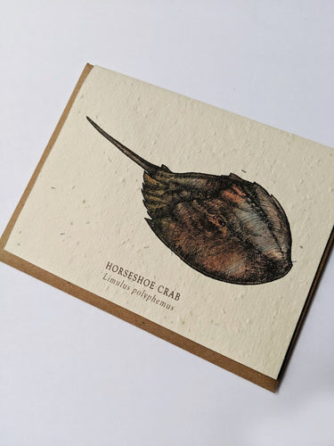 a plantable seed card - the card has a textured look from the seeds imbedded in the paper. There is a horseshoe crab drawing on this one that says